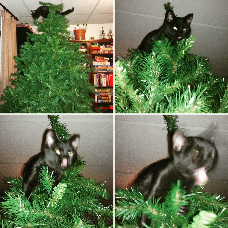 Кошкам нравится забираться как можно выше. Иновогодняя ёлка— отличное средство для достижения этой цели.