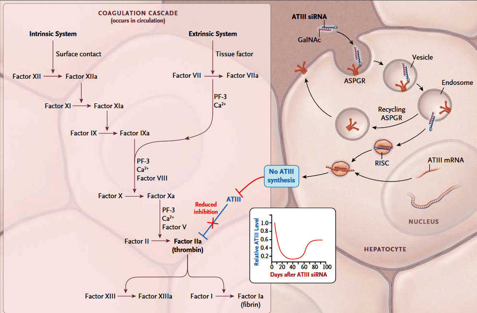 Рис. 2. Механизм действия препарата Fitusiran