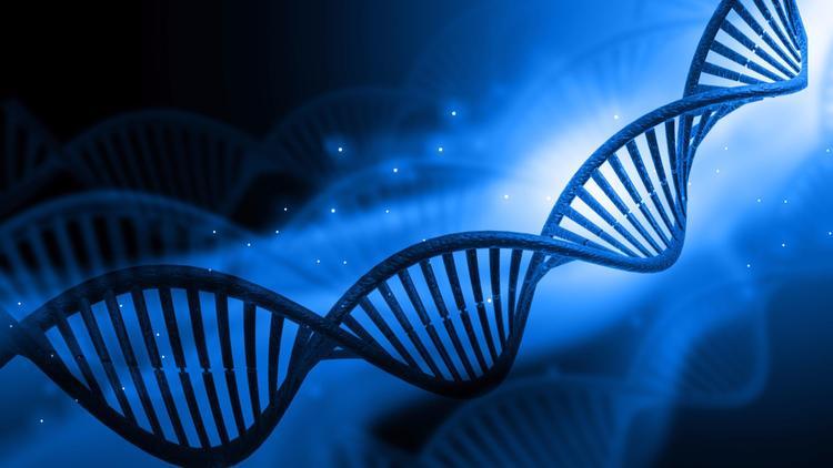 CRISPR-Cas9 впервые использован для «включения» генов вживом организме без изменения генома