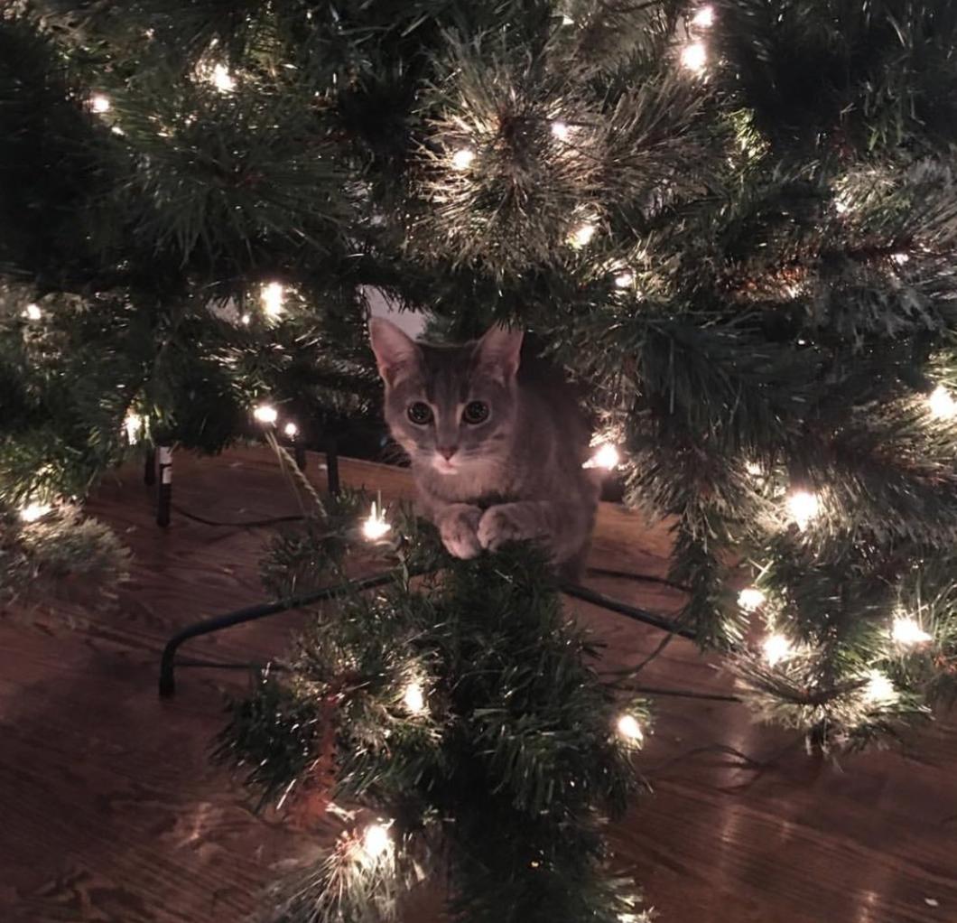 Четырёхмесячная кошечка Оливия нашла себе новое «укрытие».