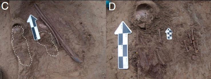 C: индивиды USR1 иUSR2 вместе спогребальным инвентарём. D: расчищенные человеческие останки впогребении. Фото из статьи 2014г.
