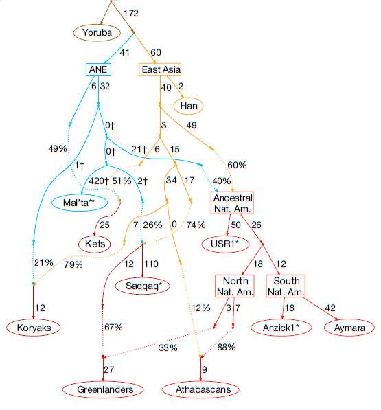 Модель формирования различных популяций коренных американцев, сучётом данных USR1
