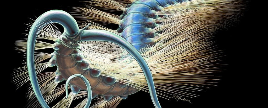 Доисторический кольчатый червь Kootenayscolex barbarensis выглядел примерно так. На«голове» видны щупальца и«антенна».