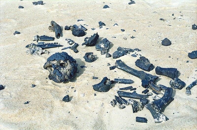 Останки сахелантропа идругие окаменелости, найденные вреспублике Чад в2001г. Предполагаемая бедренная кость— где-то справа по центру. Фото: Alain Beauvilain.