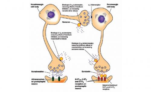 Работа миртазапина по блокировке α2-адренорецепторов
