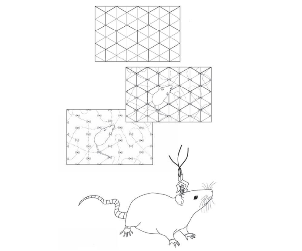 Рисунок 12. Пример того, как регистрируется шаблон перемещений крысы икак шаблон, формируемый сигналами нейронов решётки, постепенно проявляется.