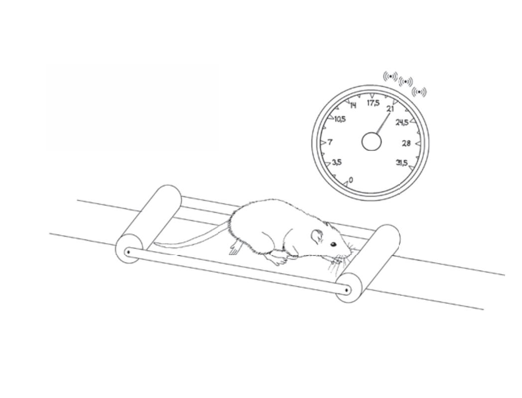 Рисунок 16. Крыса вмашине Флинстоуна, нейроны скорости испускают импульсы наскорости 21 сантиметр всекунду.
