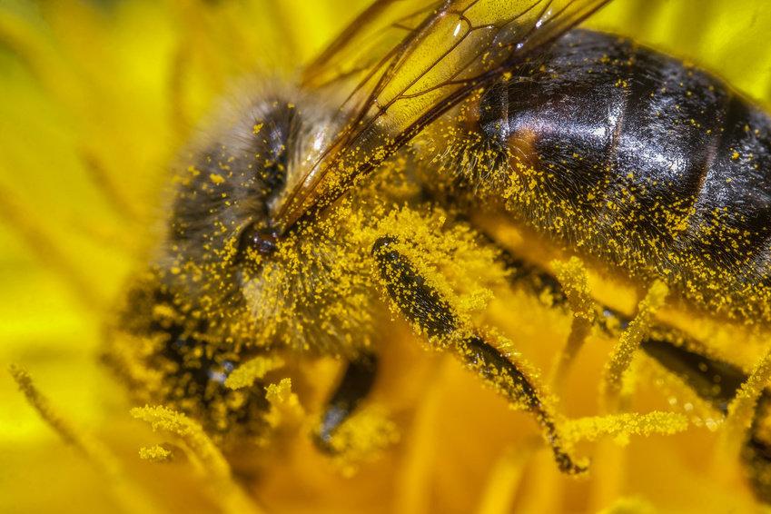 Пчела.