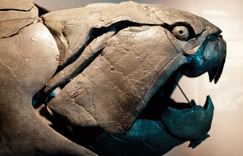 Дунклеостей (Dunkleosteus)— большая бронированная рыба позднего девона. Вдевоне, как ивкембрии, одновременно имели место стремительная диверсификация водных животных ирост уровня растворённого вокеане кислорода