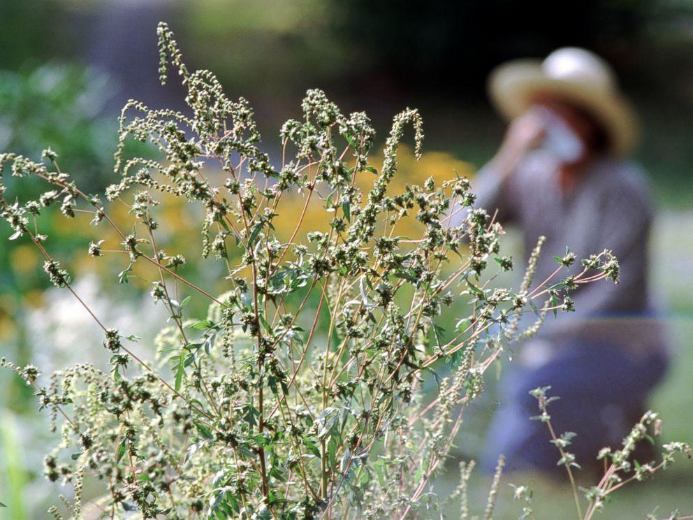 Основная причина весенней аллергии— пыльца цветущих растений.