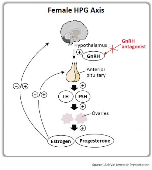 Рис. 5. Схема работы антагонистов GnRH. Anterior pituitary— передняя доля гипофиза. LH— лютеинизирующий гормон, FSH— фолликулостимулирующий гормон. HPG axis— система половые железы-гипофиз-гипоталамус.