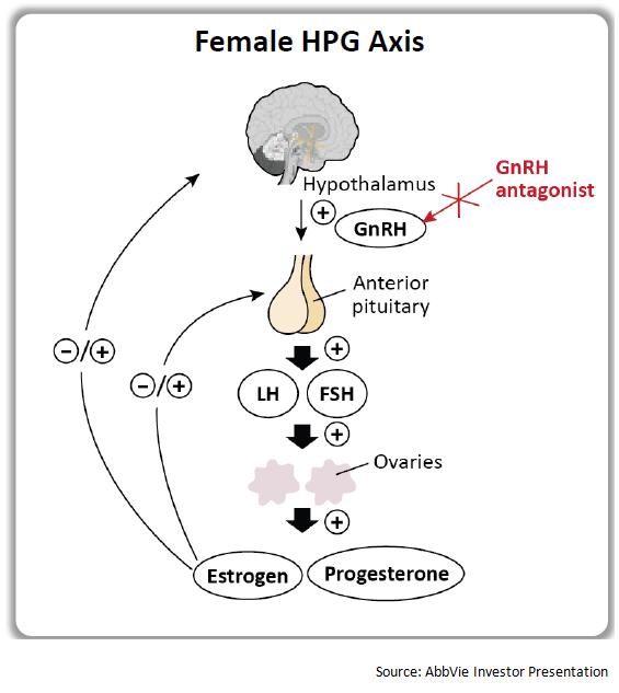 Рис. 5. Схема работы антагонистов GnRH. Anterior pituitary— передняя доля гипофиза. LH— лютеинизирующий гормон, FSH— фолликулостимулирующий гормон. HPG axis— гипоталамо-гипофизарно-гонадальная ось.