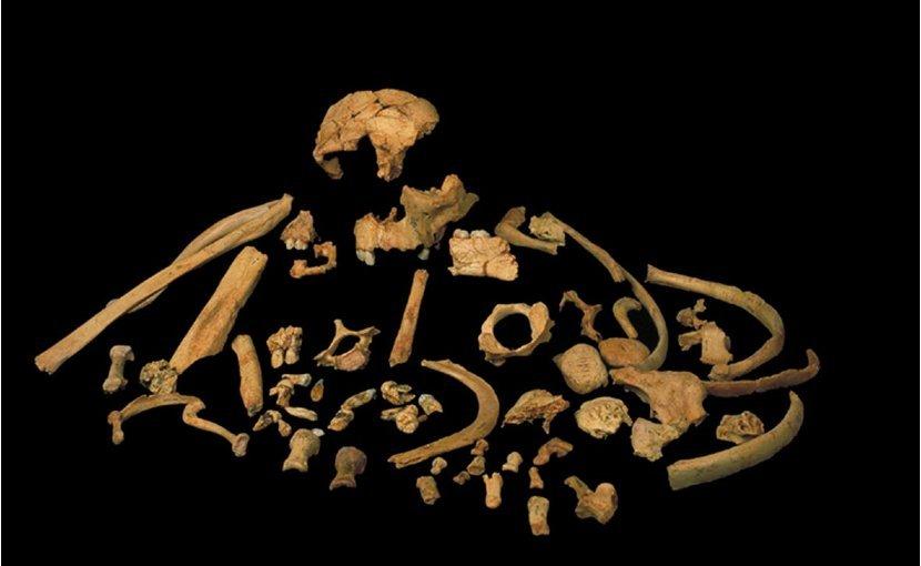 Останки <i>Homo antecessor</i>.