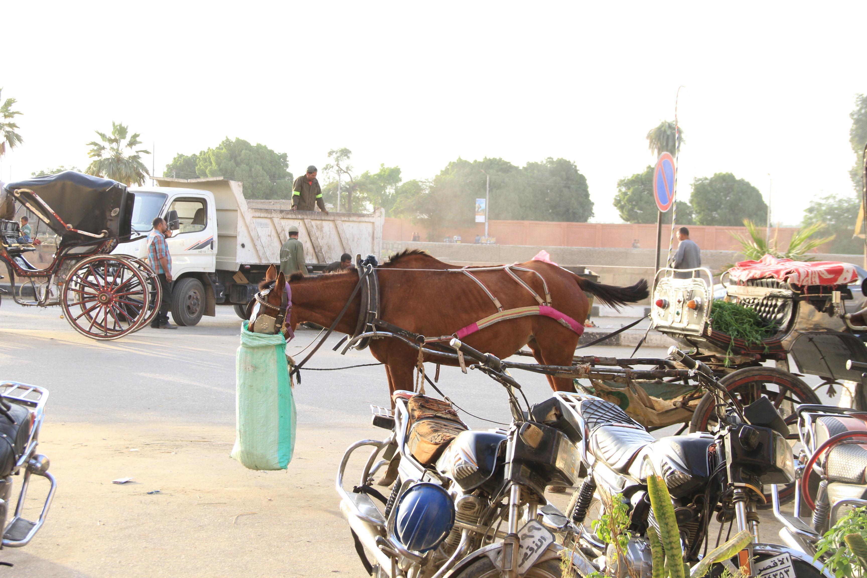 Лошадка вЛуксоре