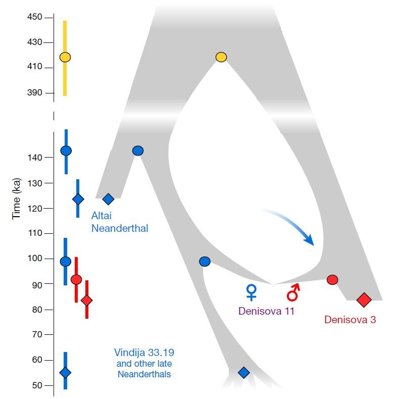 Родственные связи иобмен генами между популяциями неандертальцев иденисовцев