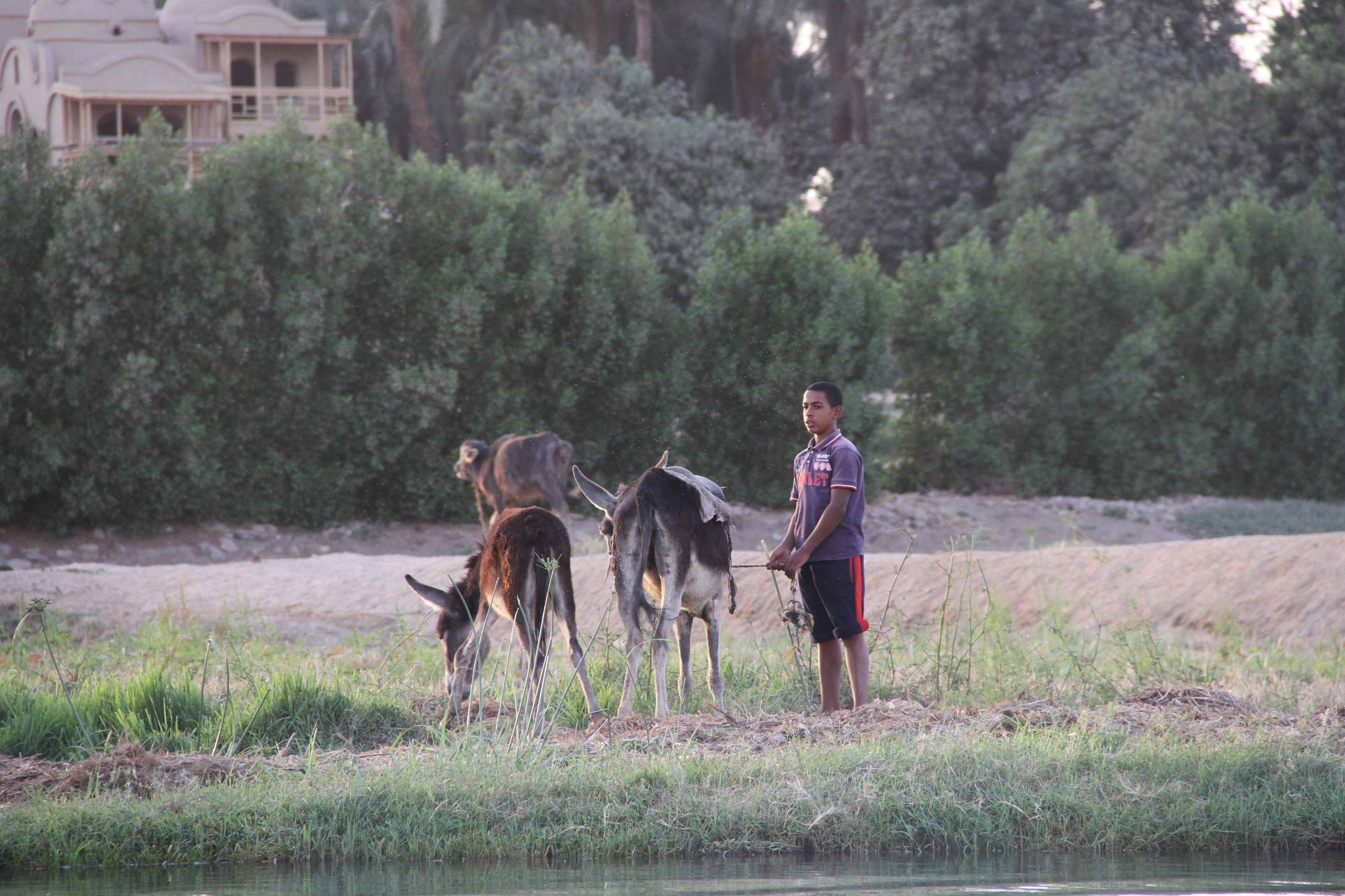 На западном берегу Нила вЛуксоре