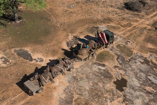 Перевозка слонов нагрузовиках