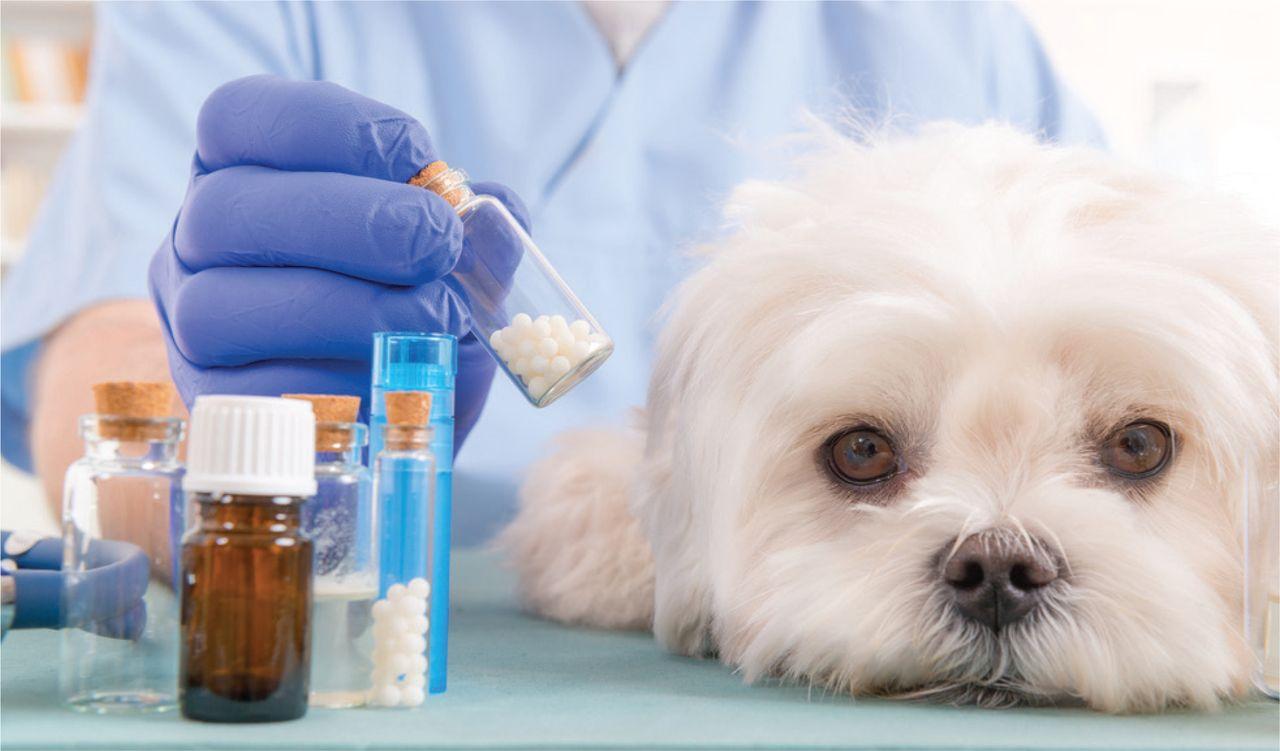Ветеринарные врачи неодобряют идею подкармливать питомцев сахаром. Собаки против.