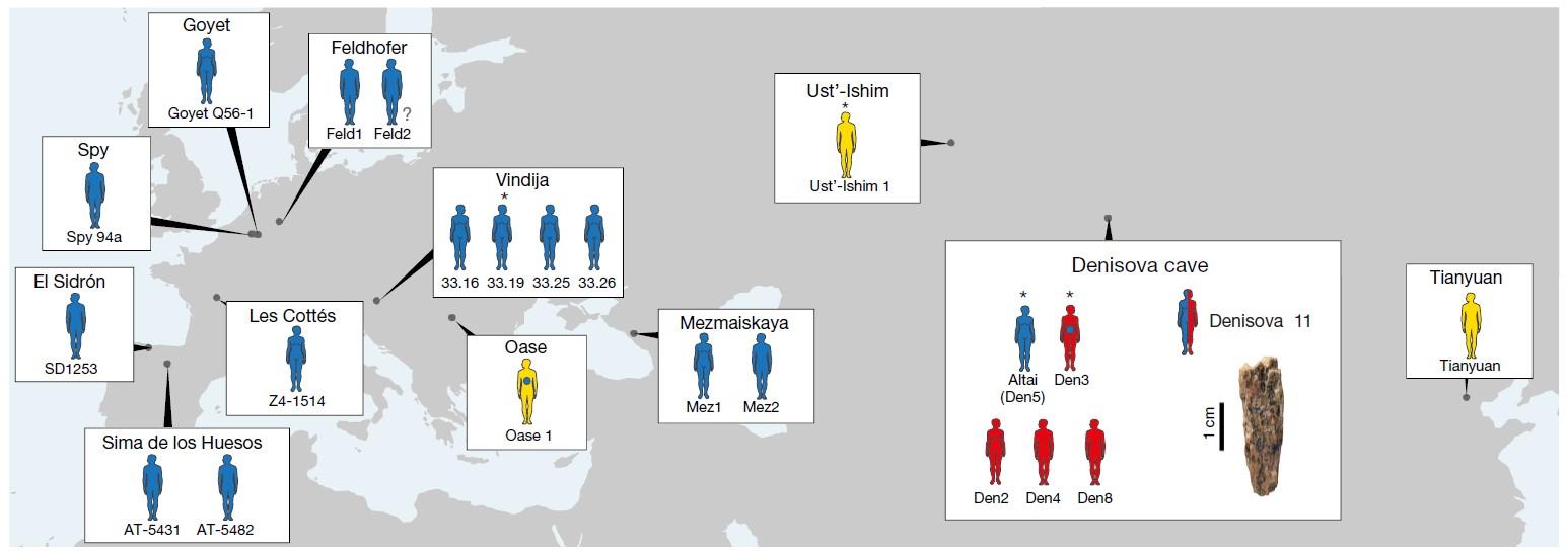 Местонахождение неандертальцев, денисовцев идревних сапиенсов, возрастом 40 тыс. лет иранее. Синим показаны неандертальцы, жёлтым— сапиенсы, красным— денисовцы.
