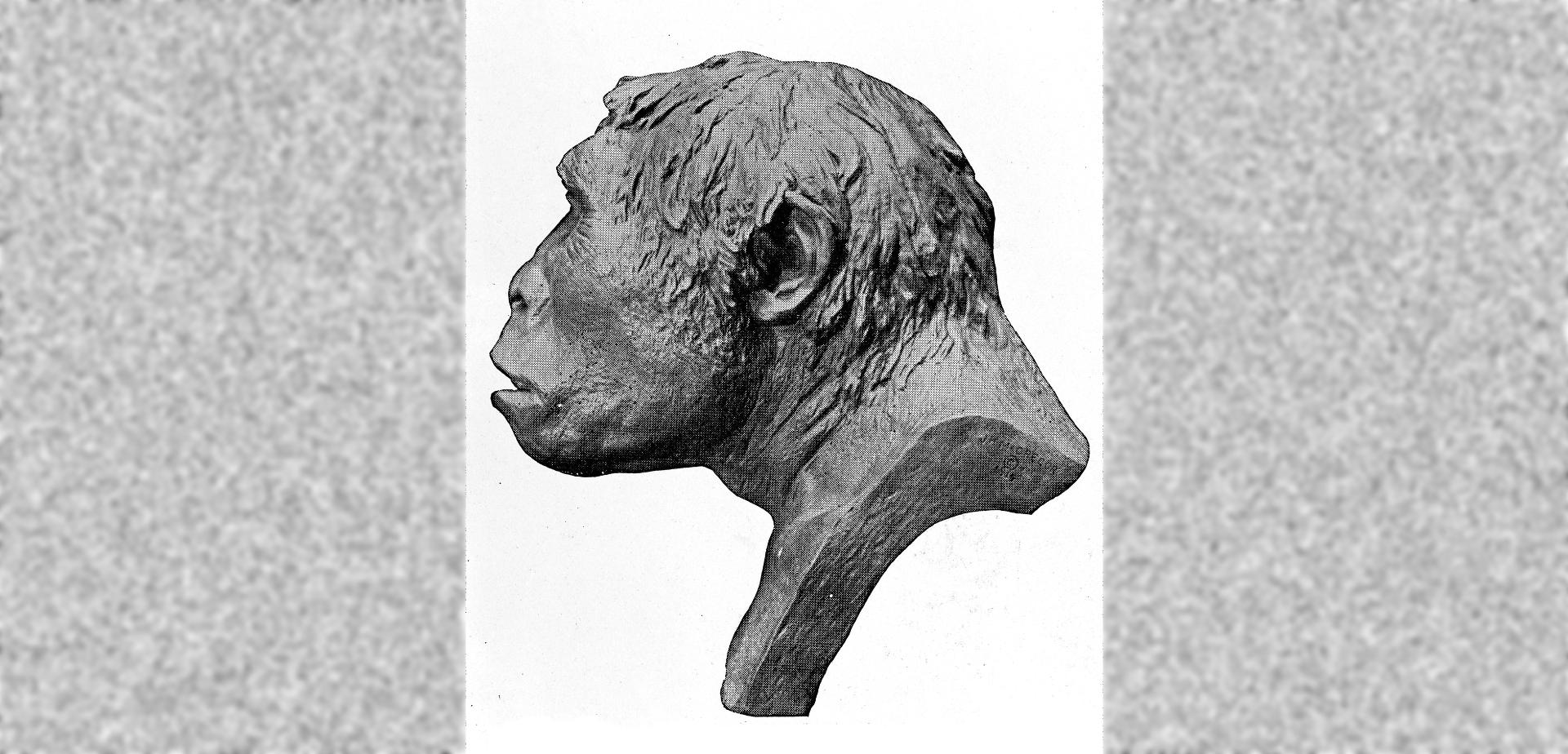 Реконструкция внешнего вида питекантропа.