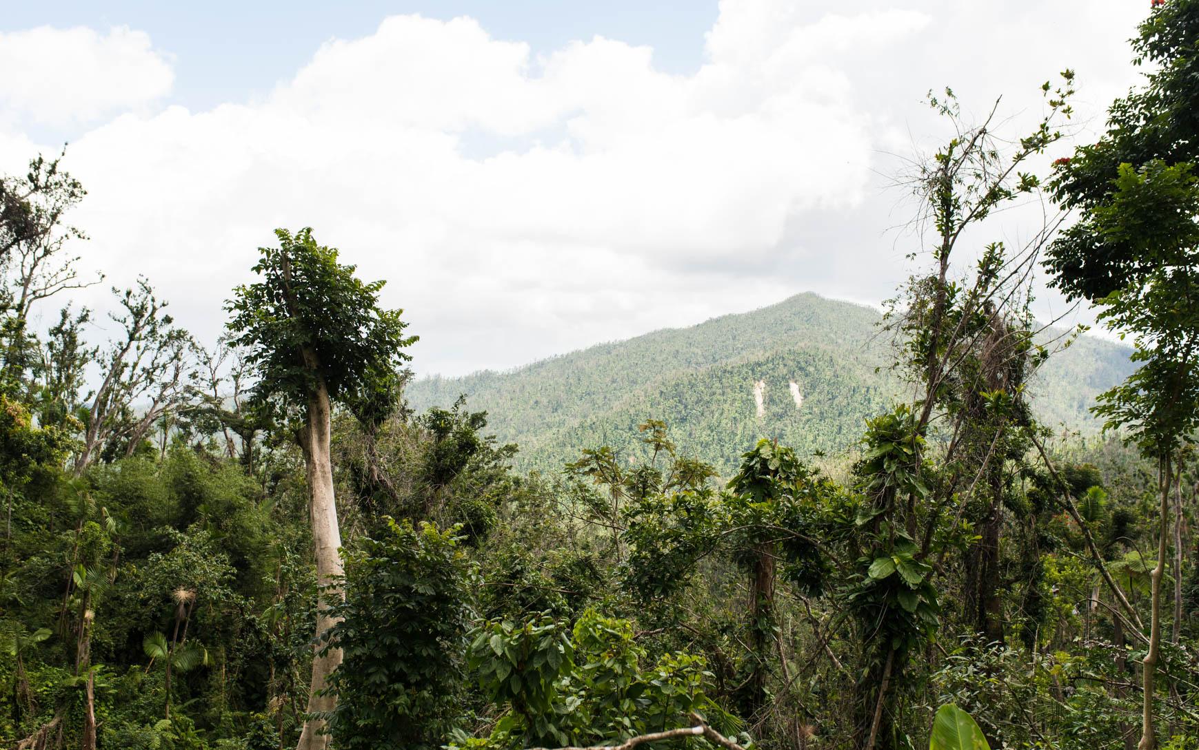 Тропический лес, Пуэрто-Рико.