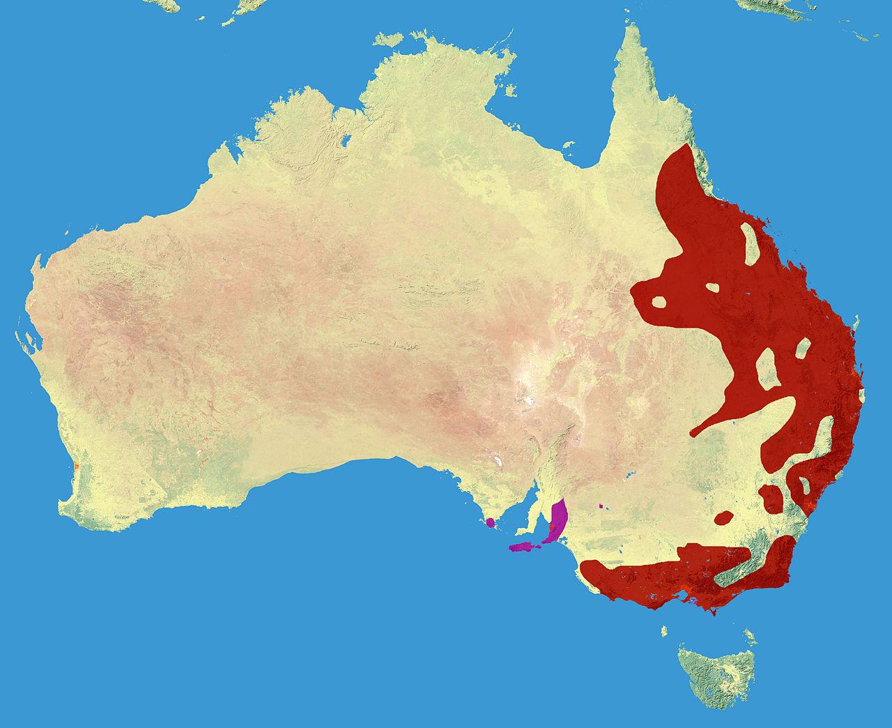 Ареал коалы