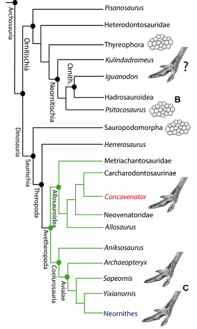 Представленность птичьего стиля вподотеке динозавров