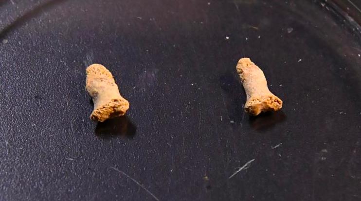 Фаланги пальцев маленького неандертальца, найденные вПольше, вероятно, побывали вжелудке хищной птицы