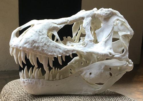 У Эр Джей есть напечатанный 3D череп динозавра Стэна (BHI 3033), напечатанный по трёхмерно отсканированному оригиналу. Мы выбрали Стэна, потому что его череп обычно считается наименее искажённым черепом Tyrannosaurus Rex. При этом зубы были помещены обратно вих гнезда правильно.