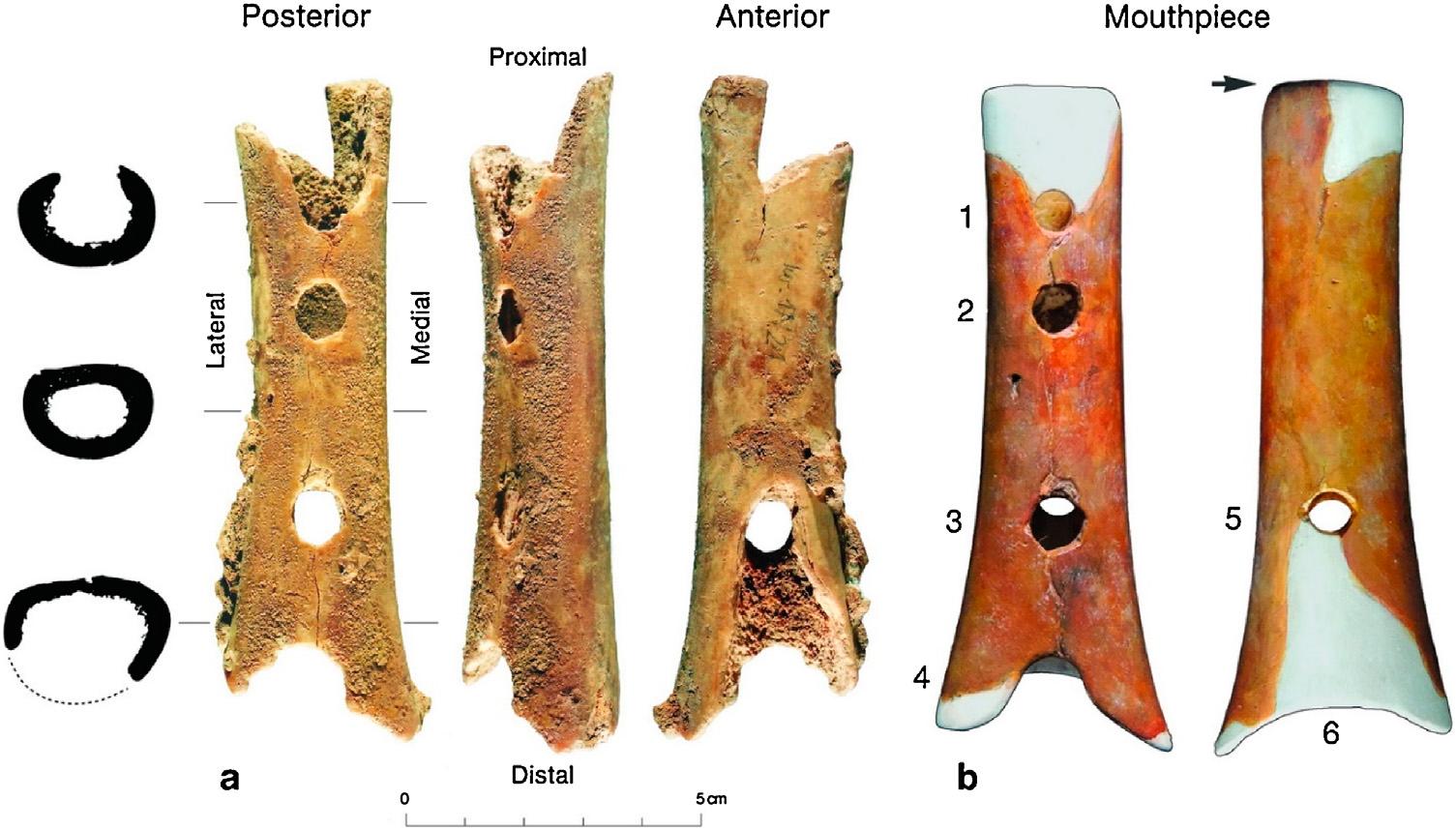Кость со следами зубов гиены? Или «мустьерский духовой инструмент»? Цифрой 5 обозначено восстановленное «отверстие для большого пальца».