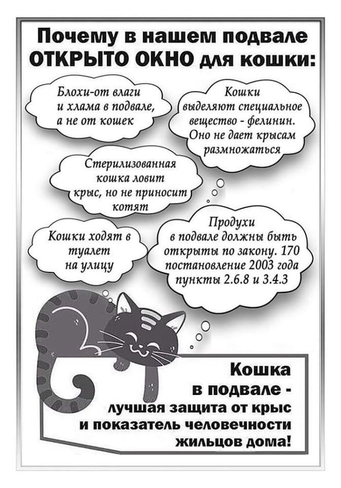 Листовка, призывающая немешать кошкам жить вподвалах