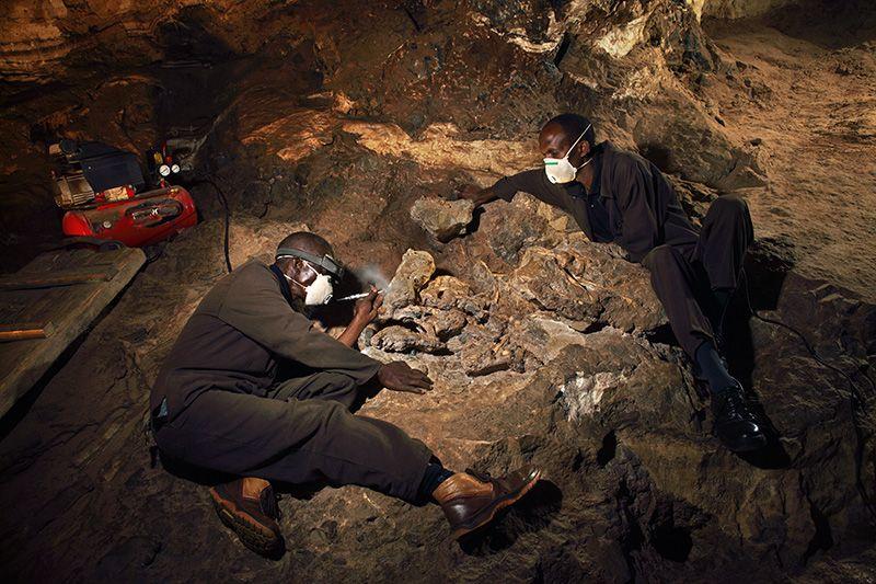Процесс высвобождения скелета StW 573 из камня.