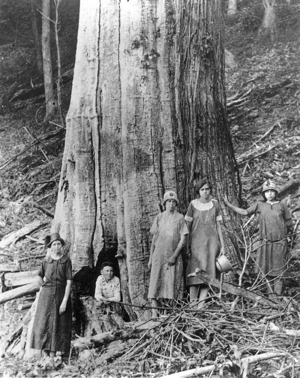 Семья Джеймса иКэролайн Шелтон (James and Caroline Shelton) позирует убольшого мёртвого каштана вТремонт-Фолс, штат Теннесси (Tremont Falls, Tennessee), 1920-е годы.