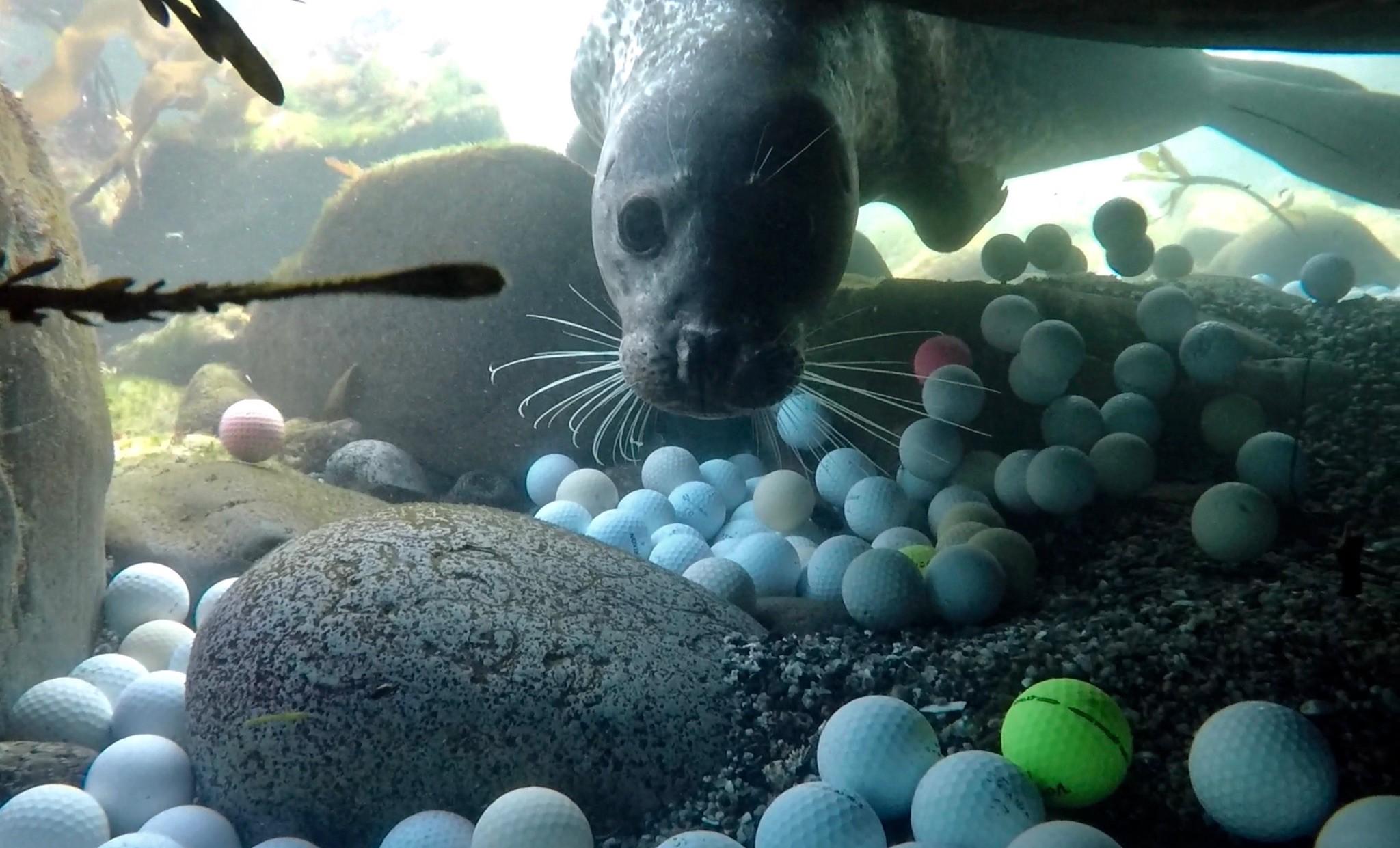 Морское дно взаливе Кармел заполнено мячами для гольфа.