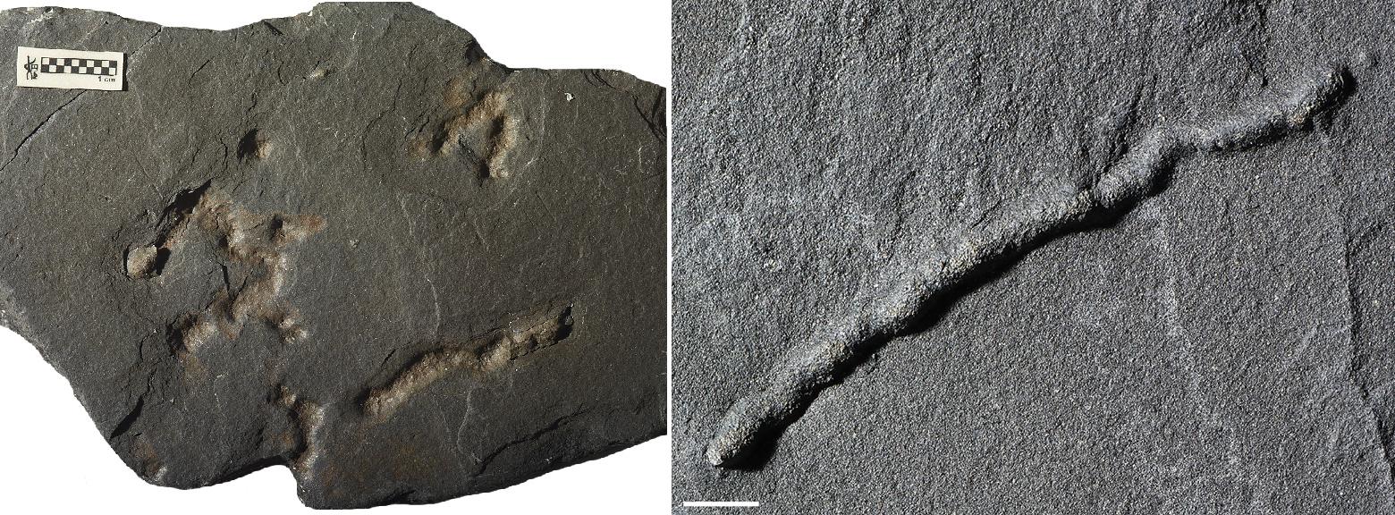 Камни возрастом 2,1млрд лет сохранили следы передвижения живых организмов.