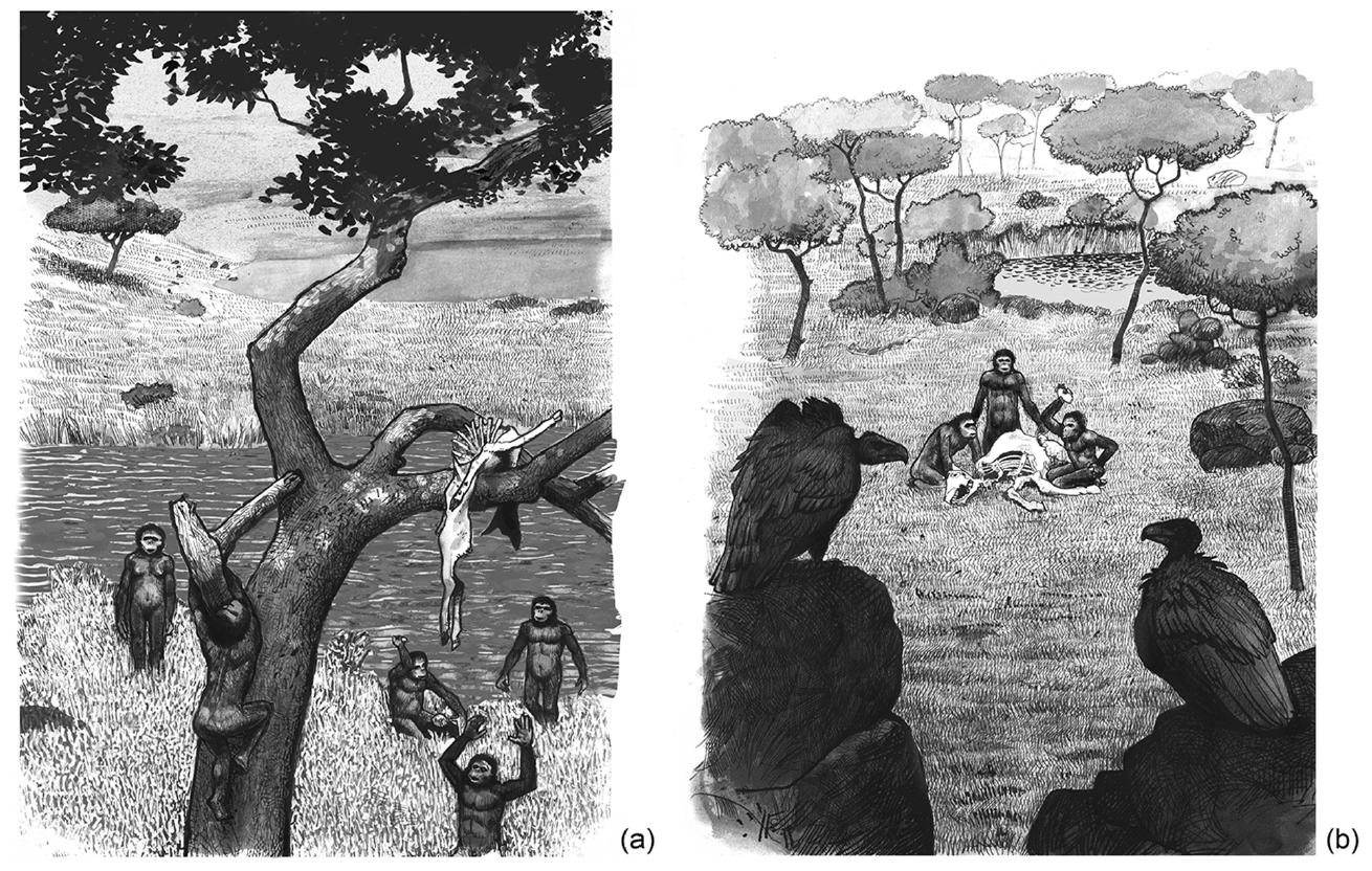 Как именно австралопитеки использовали каменные орудия? Охотились ли они? Учёные предлагают новые ответы наэти вопросы.
