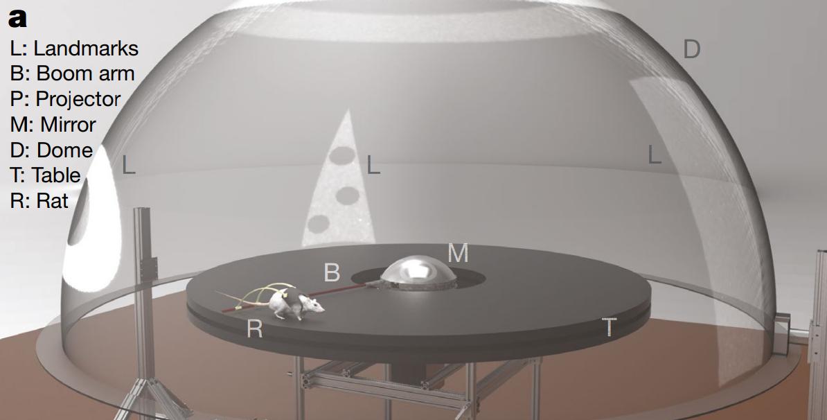 Изображение установки.<br />L— ориентиры<br />В— рычаг<br />P— проектор<br />М— зеркало<br />D— купол<br />Т— стол<br />R— крыса