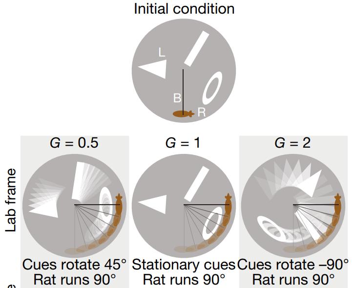 Сверху— изначальная диспозиция. Снизу, слева направо: G = 0,5— Ориентиры повернулись на45 градусов, акрыса пробежала 90 градусов G = 1— Ориентиры остались наместе, акрыса пробежала 90 градусов  G = 2— Ориентиры повернулись на−90 градусов, акрыса пробежала 90 градусов