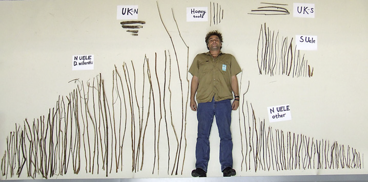 Часть орудий шимпанзе, обнаруженных входе исследования. Вкачестве масштабной линейки использован исследователь Йерун Свинкелс (Jeroen Swinkels), рост 1,9 м