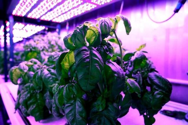 Машинное обучение подскажет, как сделать базилик вкуснее