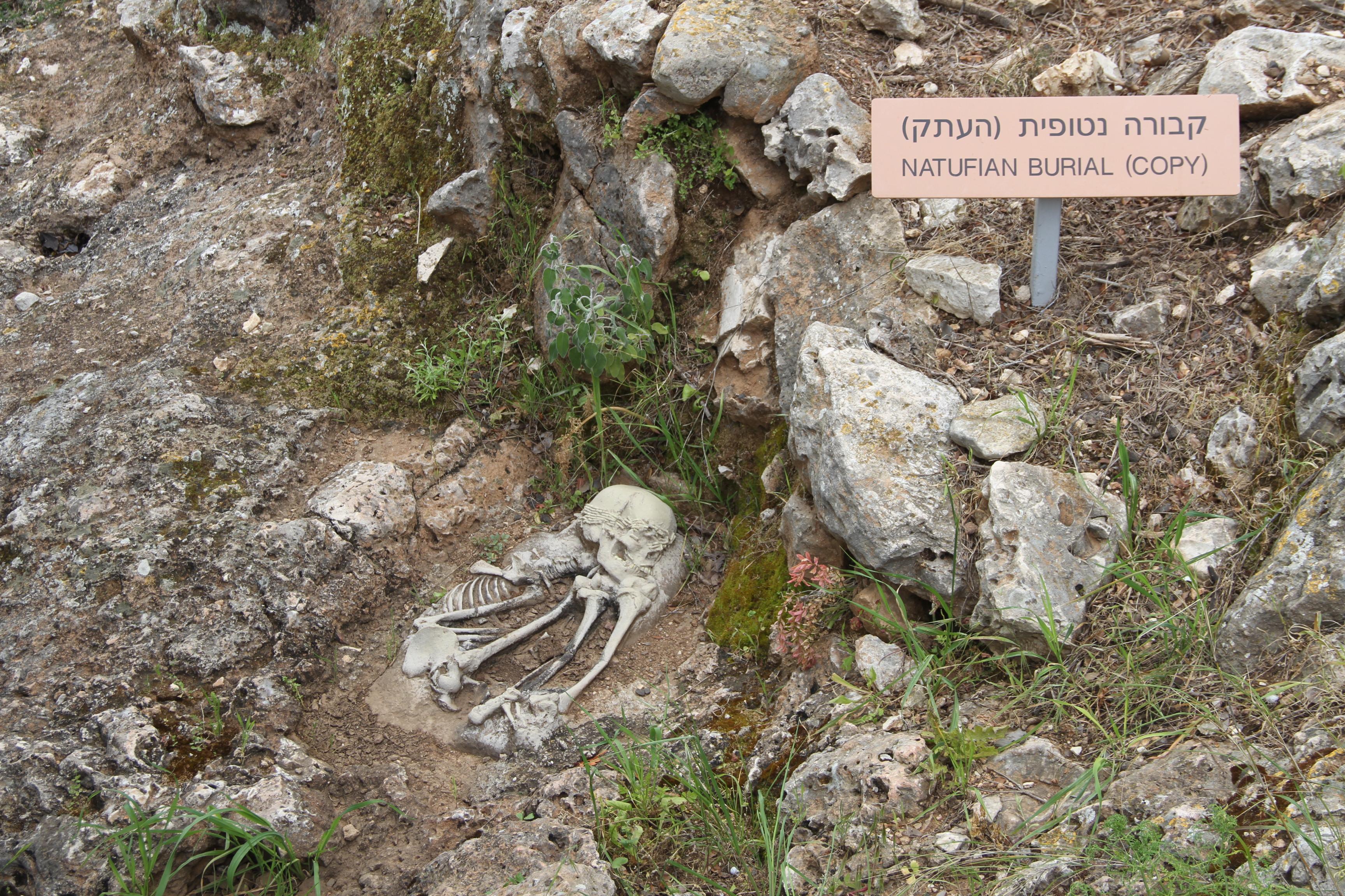 Реконструкция погребения натуфийской культуры рядом спещерой аль-Вад