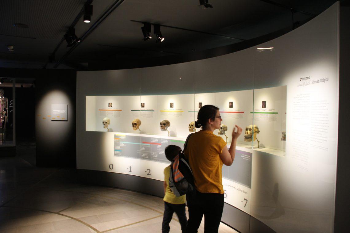 Антропогенез вМузее естественной истории имени Стейнхардта