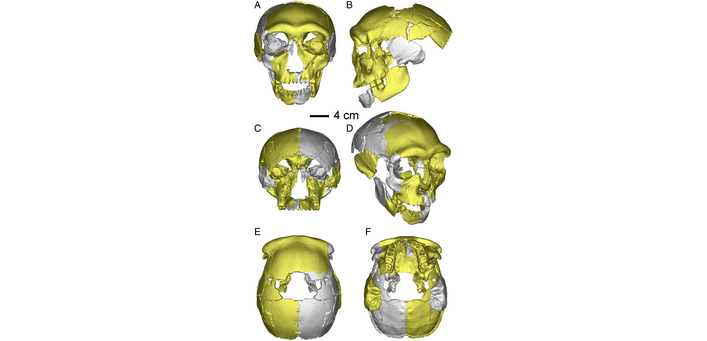 Виртуальная реконструкция черепа из Хуалундун.