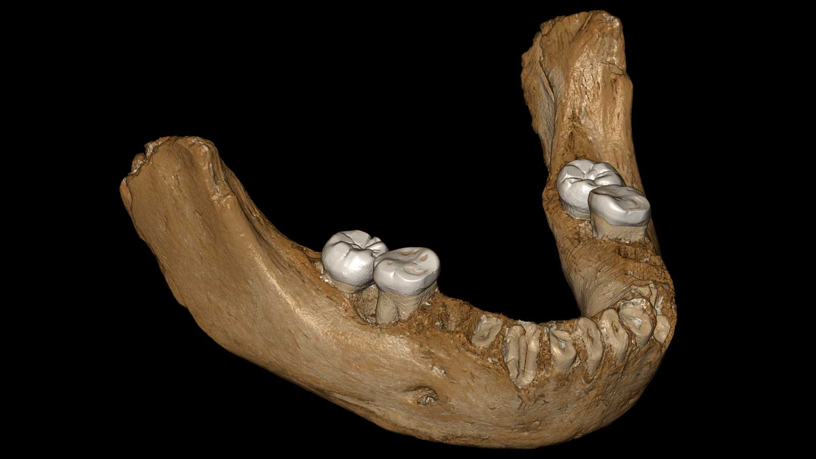 Реконструированная челюсть из пещеры Байшия.
