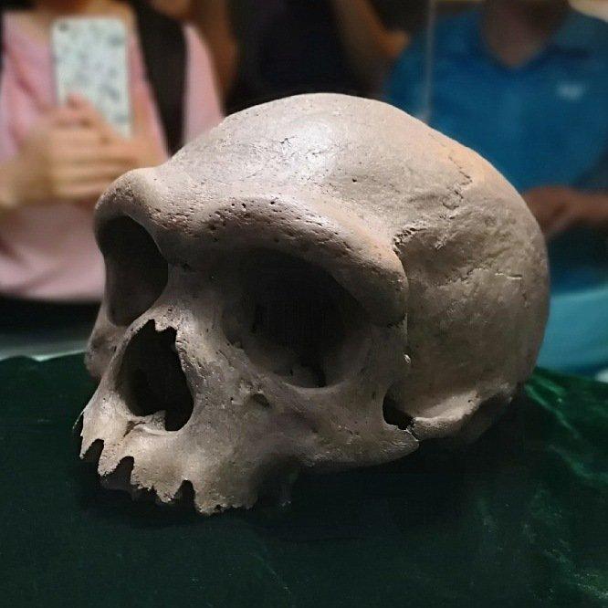 Череп гейдельбергского человека, найденный насеверо-востоке Китая
