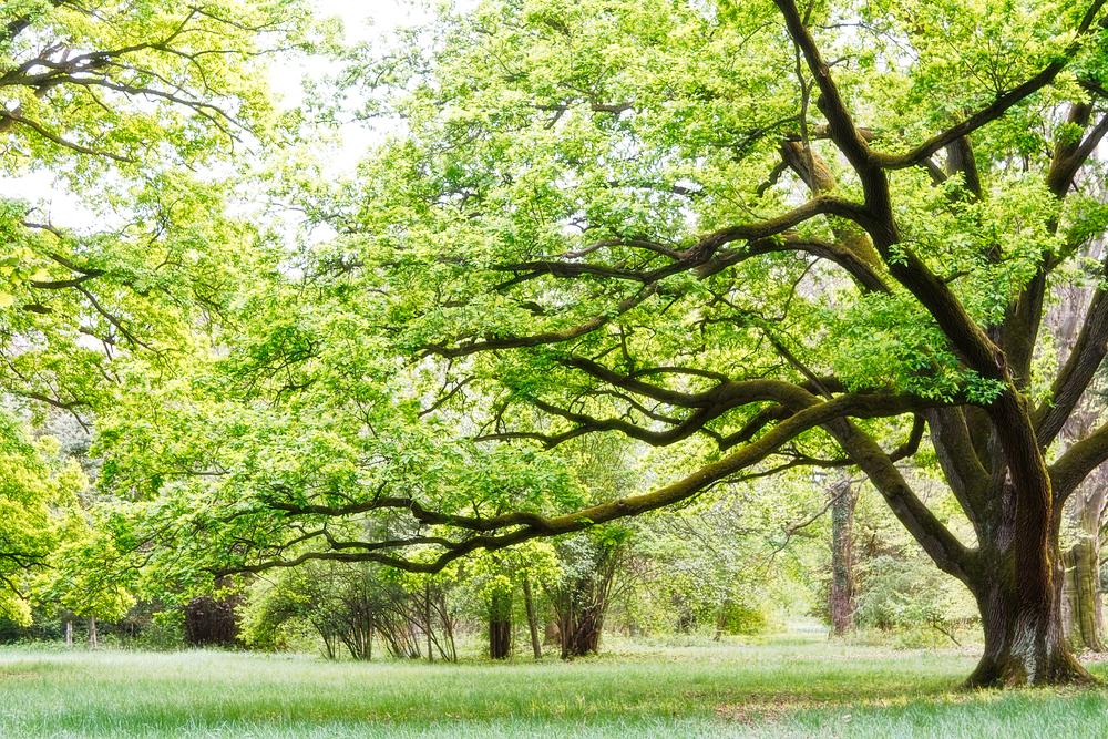 Триллион деревьев, вероятно, может спасть планету.