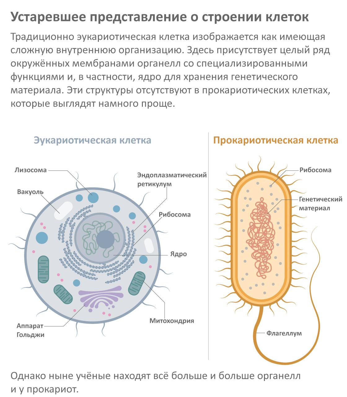 Устаревшее представление остроении клеток