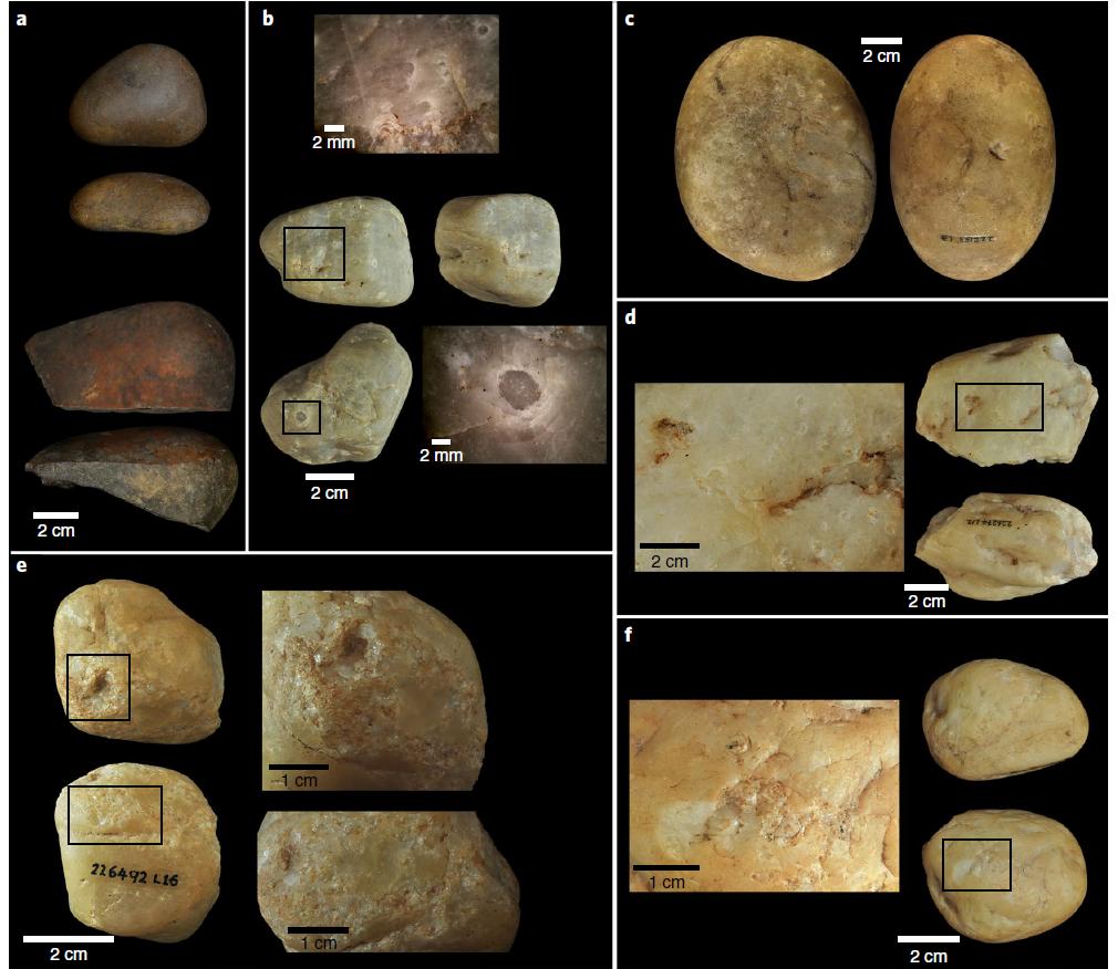 Каменные орудия капуцинов
