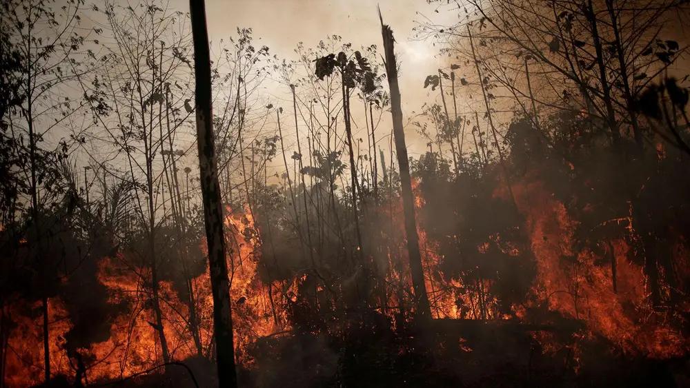 Горящие леса Амазонки— это несравнимо хуже, чем горящие леса Сибири.