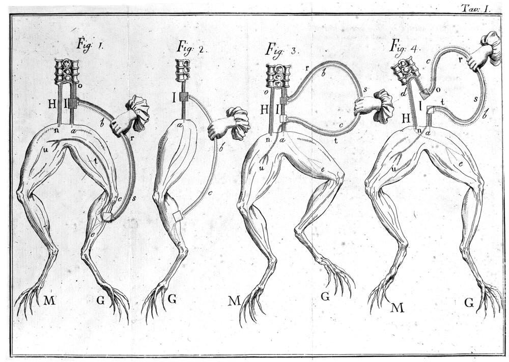 Рисунки Луиджи Гальвани, исследователя, который обнаружил, что мышцы лягушки активируются электричеством.